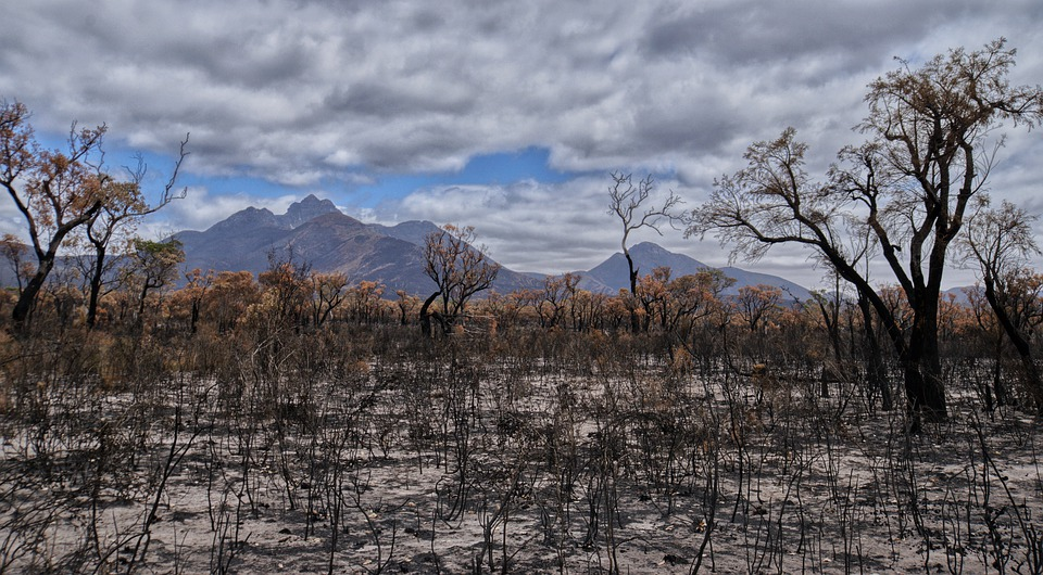 Incendi e cambiamento climatico: una minaccia sempre più globale